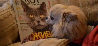 В газетных киосках начнут продавать котов
