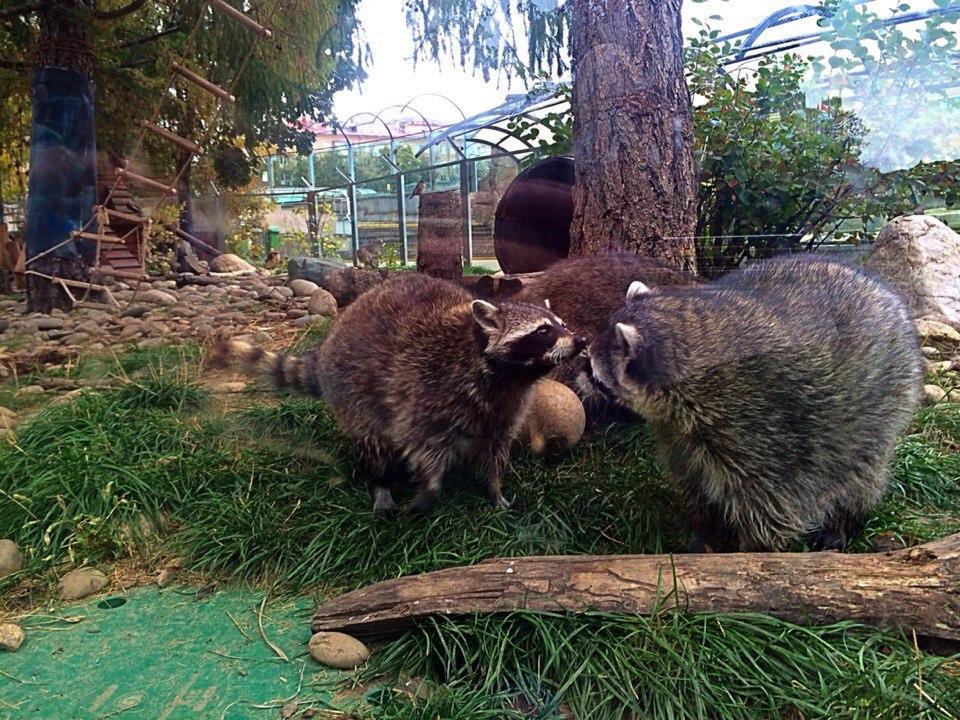 В Московском зоопарке появились фонари